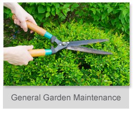 Other side group property maintenance service for General garden maintenance